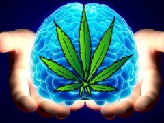 Efficacy of Marijuana for Alzheimer's